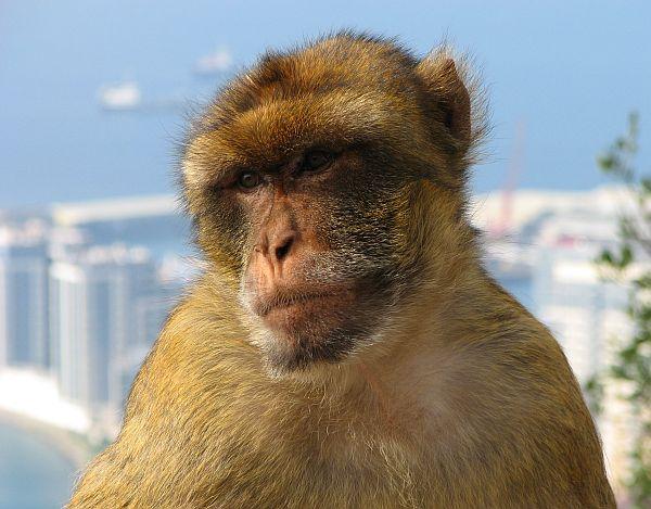 małpa.jpg